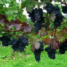 Arboles frutales on pinterest bonsai fruit and villas for Arboles frutales para jardin
