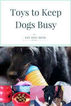 Keep a Busy Dog Busy