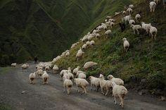 flock | Flickr