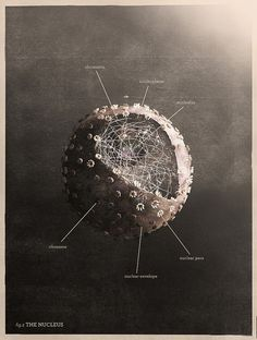 Cell Nucleus, illustration by mrkism