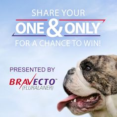 You know your dog is special, so why not celebrate what makes your pet your ONE & Only with the world? We want you to introduce us to your pet by sharing a photo and telling us what makes your pet your ONE & Only!   When you share a pic and tell us what makes your dog special you will be entered for a chance to win one of 12 different prizes over 12 weeks! Get started here: http://woobox.com/9okvwg