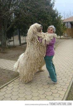 A giant mop!
