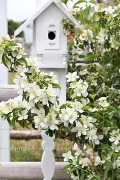 Mock Orange | laughing with angels