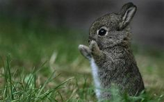 high five, animal pictures, carrot, cutest babies, baby bunnies, peter rabbit, baby animals, animal babies, easter bunny