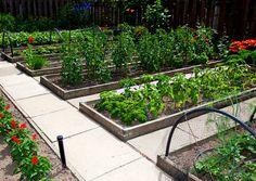 Raised bed veg garden