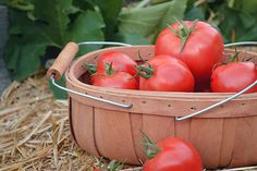 Have an Abundance of Tomatoes? Preserve Them by Sun Drying