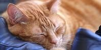 More natural treatments for ear mites in cats