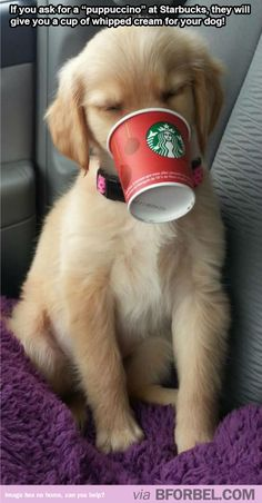 """I'm a barista at Starbucks and I love when customers order puppuccinos <3"""