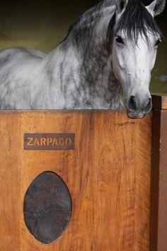 Spanish horse.