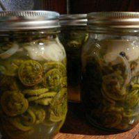 pickled fiddlehead recipe