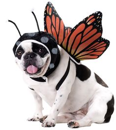 Butterfly Dog Costume - Dog Halloween Costumes from EntirelyPets