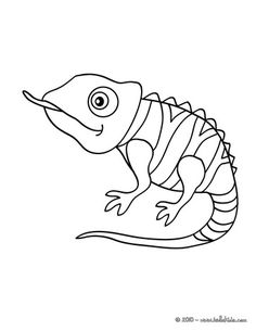 cute little animals | ... Cute Chameleon Coloring Page Is The Most Beautiful Among All Coloring