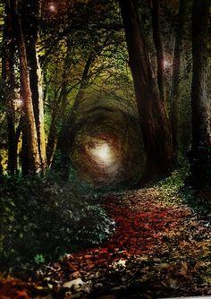 Enchanted Forest,Ireland