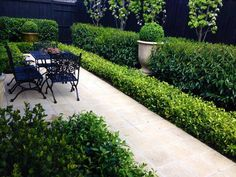 Andrew Stark Garden Design: Mass plantings of fragrant gardenias & star jasmine border tall hedges of laurel & pears. Five very special urns are dotted throughout the tiny space and are planted with English box spheres.