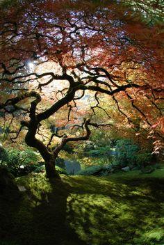 asian garden, garden trees, color, japanes garden, japanese gardens, place, art shows, tree of life, portland oregon