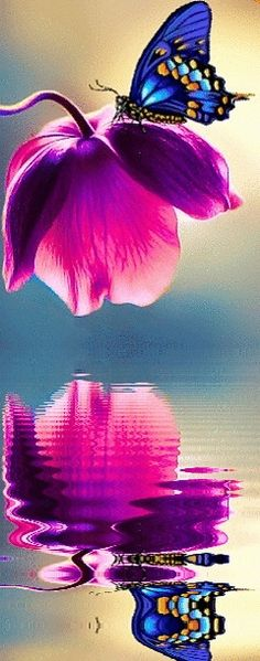 Beautiful butterfly and pink flower reflected in the water