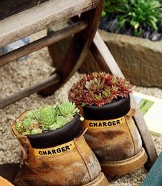 ABC of Succulents: In pots