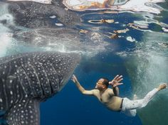 photo of the day, nat geo- whale shark, new guinea