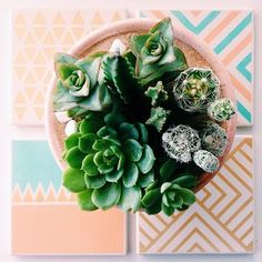 Patterned coasters + succulents