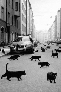 dreams, apocalypse, friday the 13th, city streets, black cats, kitty, blackcat, heavens, cat lady