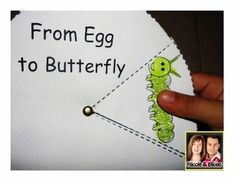 """Fun """"From Egg to Butterfly"""" life cycle wheel for elementary science!"""