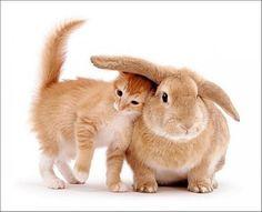 :) kittycats