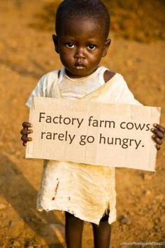 Factory farm cows rarely go hungry