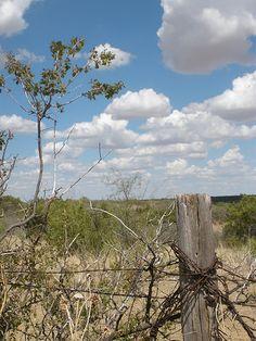 West Texas Prairie