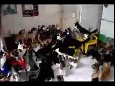 Cats MOSH PIT! (Brutal)