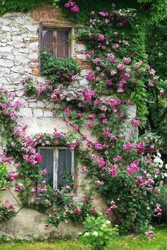 Climbing roses! prefer if it was lavender so the mosquitos would go away from my window