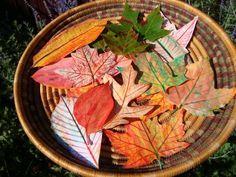 maya*made: Autumn leaf rubbings