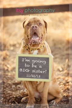 Cute baby announcement idea with doggy and a chalk board.