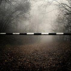 forests, ako major, fog, landscap photographi, behance, art, behanc network, inspir, landscape photography