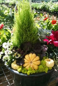 Fall Container Garden. Mini-conifers, which will thrive all winter long, with specialty gourds, reindeer moss and ornamental kale. Throw in some cool season color such as cyclamen and violas and you have a beautiful low-maintenance combination to carry you through the holidays.