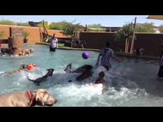 It's Pool Time at Always Unleashed Pet Resort!! - YouTube