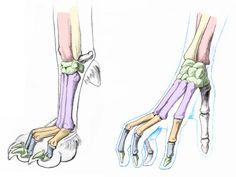 Canine hand and human hand #anatomy