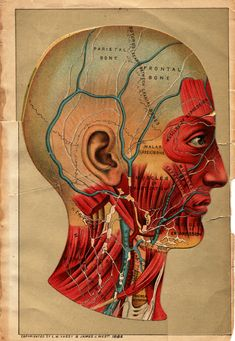 Anatomical flipbook, L.W. Yaggy & James J. West, 1885.