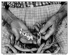 stringing beans