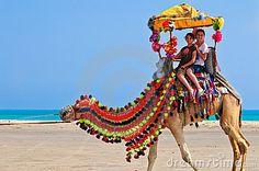 Google Image Result for http://www.dreamstime.com/camel-ride-thumb13638704.jpg