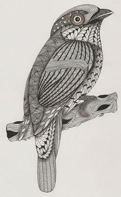 silver breasted broadbill  template van Ben Kwok Adri