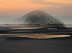 Amazing Bird Formation