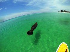Manatee Florida Gulf Coast