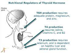 Nutritional Regulation of Thyroid Hormones