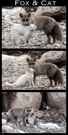 ... | The 30 Most Inspiring Interspecies Friendships Of The Year