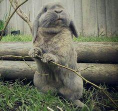 #bunny #rabbit #house rabbit