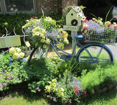 repurpose old bike as flower garden   My bike flowers are starting to really fill in nicely in the baskets.