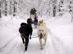 Dogsledding in Pure Michigan