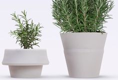 Fold Pot, a silicone rubber planter that unfurls to double its size.