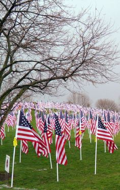Healing Fields for Veteran's Day