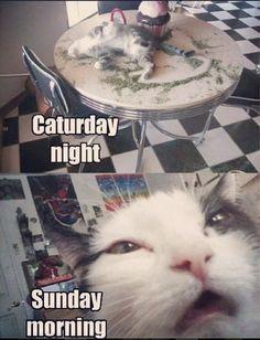 Caturday night. Sunday morning.